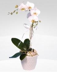 1 dallı orkide saksı çiçeği  Aksaray online çiçekçi , çiçek siparişi