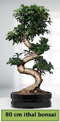 80 cm özel saksıda bonsai bitkisi  Aksaray çiçekçi telefonları