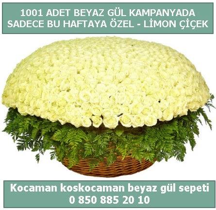 1001 adet beyaz gül sepeti özel kampanyada  Aksaray çiçek gönderme sitemiz güvenlidir