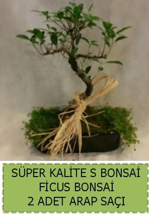 Ficus S Bonsai ve arap saçı  Aksaray çiçekçi telefonları