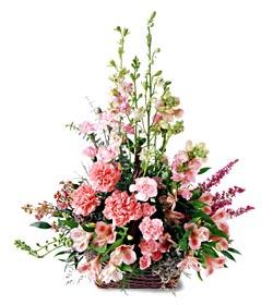 Aksaray ucuz çiçek gönder  mevsim çiçeklerinden özel