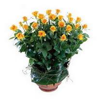 Aksaray cicekciler , cicek siparisi  10 adet sari gül tanzim cam yada mika vazoda çiçek