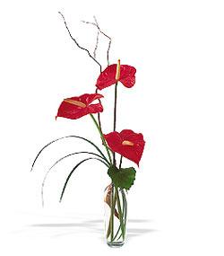 Aksaray çiçek siparişi sitesi  cam yada mika Vazoda 3 adet  antoryum
