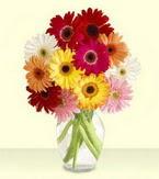 Aksaray çiçek yolla , çiçek gönder , çiçekçi   cam yada mika vazoda 15 özel gerbera