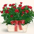 Aksaray İnternetten çiçek siparişi  11 adet kirmizi gül sepette