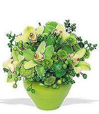 cam yada mika vazoda 5 adet orkide   Aksaray online çiçekçi , çiçek siparişi