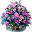 karisik mevsim kir çiçekleri  Aksaray çiçek gönderme sitemiz güvenlidir