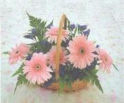 gerbera çiçeklerinde sepet   Aksaray çiçek yolla