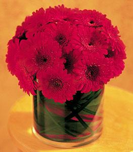 Aksaray ucuz çiçek gönder  23 adet gerbera çiçegi sade ve sik cam içerisinde