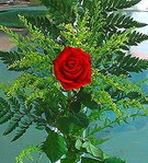 1 adet kirmizi gül buketi   Aksaray çiçek siparişi vermek