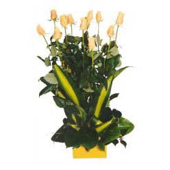 12 adet beyaz gül aranjmani  Aksaray kaliteli taze ve ucuz çiçekler
