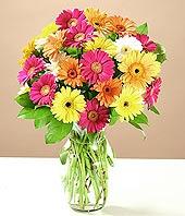 Aksaray çiçek online çiçek siparişi  17 adet karisik gerbera