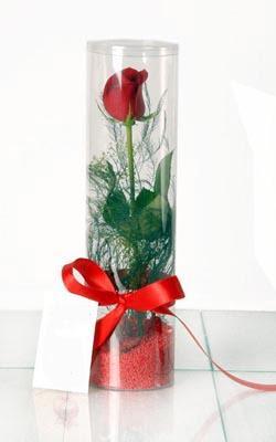 Aksaray çiçek yolla  Silindir vazoda tek kirmizi gül