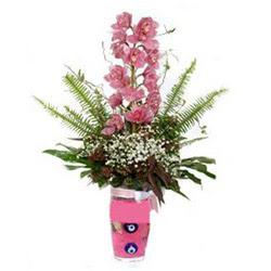 Aksaray hediye çiçek yolla  cam yada mika vazo içerisinde tek dal orkide çiçegi