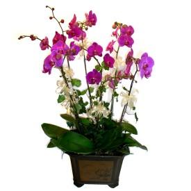Aksaray cicek , cicekci  4 adet orkide çiçegi