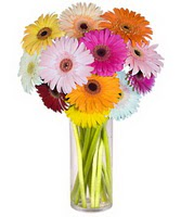 Aksaray internetten çiçek siparişi  Farkli renklerde 15 adet gerbera çiçegi