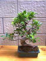 ithal bonsai saksi çiçegi  Aksaray hediye sevgilime hediye çiçek