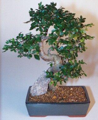 Aksaray çiçek gönderme sitemiz güvenlidir  ithal bonsai saksi çiçegi  Aksaray çiçek siparişi sitesi