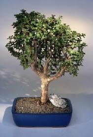 Aksaray çiçek gönderme  ithal bonsai saksi çiçegi  Aksaray çiçekçiler