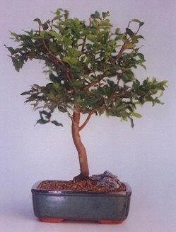 Aksaray ucuz çiçek gönder  ithal bonsai saksi çiçegi  Aksaray anneler günü çiçek yolla