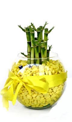 cam fanus içerisinde bambo  Aksaray internetten çiçek satışı