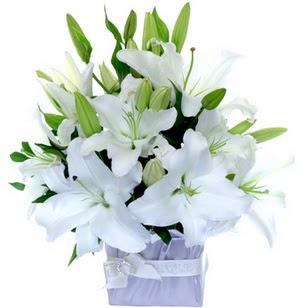 Aksaray çiçek yolla  2 dal cazablanca vazo çiçeği