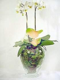 Aksaray çiçek satışı  Cam yada mika vazoda özel orkideler