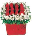 Aksaray çiçek gönderme  Kare cam yada mika içinde kirmizi güller - anneler günü seçimi özel çiçek