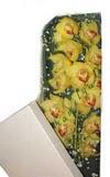 Aksaray çiçek gönderme  Kutu içerisine dal cymbidium orkide
