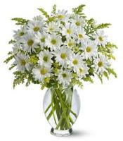 Vazo içerisinde beyaz krizantem çiçekleri  Aksaray çiçekçi mağazası