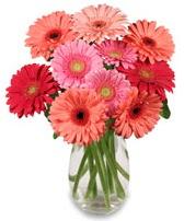 vazo içerisinde 13 adet gerbera çiçeği  Aksaray çiçek siparişi sitesi