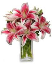 Vazo içerisinde 5 dal kazablanka çiçeği  Aksaray cicekciler , cicek siparisi