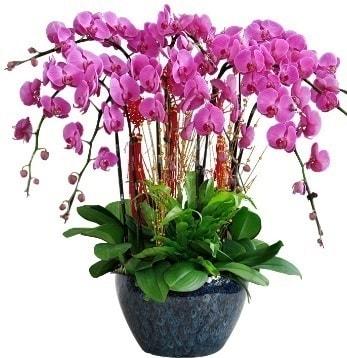 9 dallı mor orkide  Aksaray 14 şubat sevgililer günü çiçek