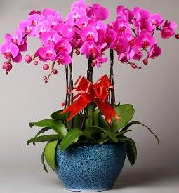 7 dallı mor orkide  Aksaray çiçek online çiçek siparişi