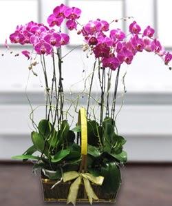 4 dallı mor orkide  Aksaray güvenli kaliteli hızlı çiçek