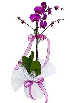 Tek dallı mor orkide  Aksaray çiçekçi telefonları