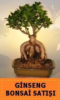 Ginseng bonsai satışı japon ağacı  Aksaray cicek , cicekci