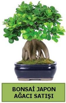 Bonsai japon ağacı satışı  Aksaray çiçek satışı