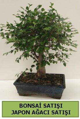 Minyatür bonsai japon ağacı satışı  Aksaray çiçek gönderme sitemiz güvenlidir