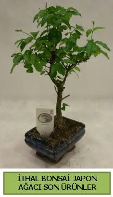 İthal bonsai japon ağacı bitkisi  Aksaray hediye sevgilime hediye çiçek