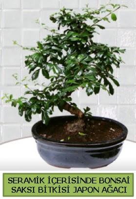 Seramik vazoda bonsai japon ağacı bitkisi  Aksaray çiçek siparişi sitesi