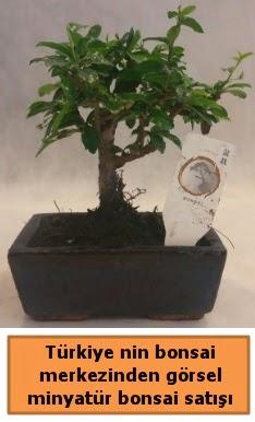 Japon ağacı bonsai satışı ithal görsel  Aksaray çiçek yolla