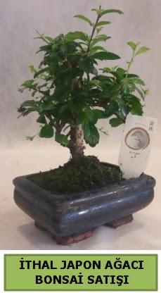 İthal japon ağacı bonsai bitkisi satışı  Aksaray çiçekçi telefonları