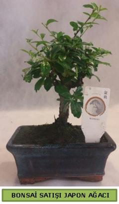 Minyatür bonsai ağacı satışı  Aksaray çiçek gönderme