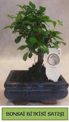 Bonsai ithal görsel minyatür japon ağacı  Aksaray ucuz çiçek gönder