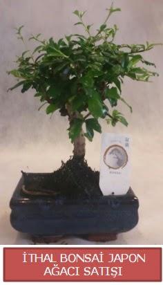 İthal küçük boy minyatür bonsai ağaç bitkisi  Aksaray çiçekçi telefonları