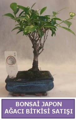 İthal Bonsai japon ağacı bitkisi satışı  Aksaray İnternetten çiçek siparişi