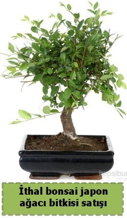 İthal bonsai saksı çiçeği Japon ağacı satışı  Aksaray İnternetten çiçek siparişi