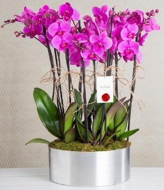 11 dallı mor orkide metal vazoda  Aksaray çiçek gönderme sitemiz güvenlidir