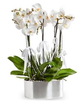 Beş dallı metal saksıda beyaz orkide  Aksaray çiçek yolla